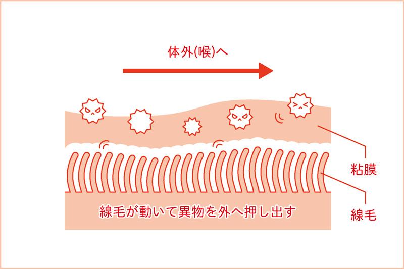 線毛が動くと異物が体外(喉)へ押し出される